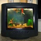 aquario-internet